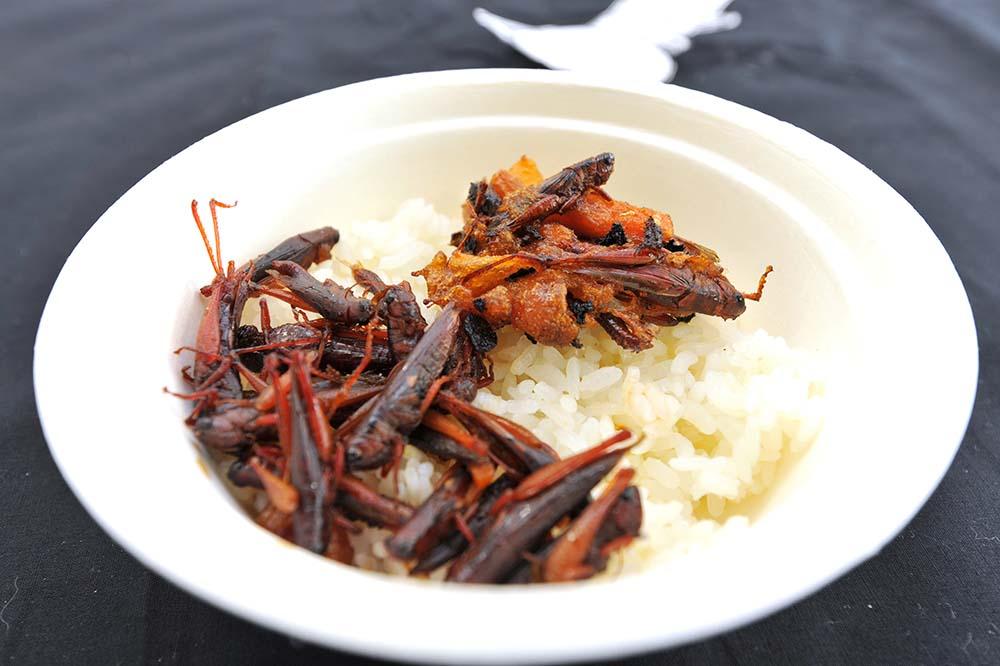 イナゴ飯。想像以上においしい。昆虫は世界を救う。らしい。